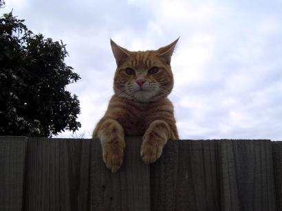 cat albert